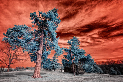 "Fire in the Sky March 19, 2009  Captured with an infrared-converted Nikon D70s.  Most of the time I ""channel swap"" the colors on my infrared (IR) shots. I normally don't like the uncorrected red sky. But this one seemed to work. The subject matter isn't great, but the tree in the foreground is pretty dramatic in IR."